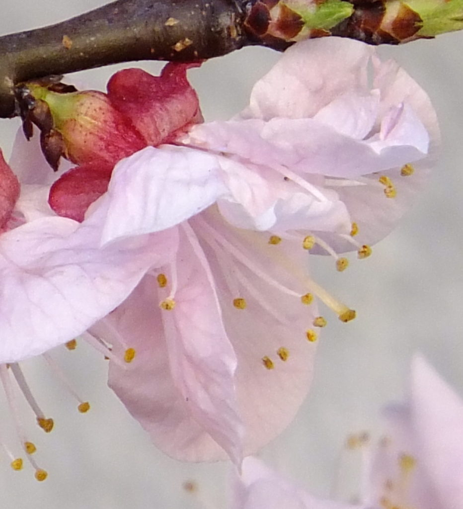 春  撮影:浅海禎子