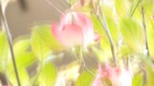 #絆と癒しCOMの動画7