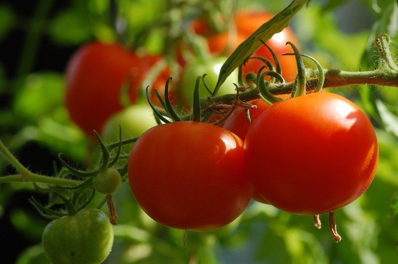 市民農園の利用者は、非利用者に比べ精神的な健康状態が2.3倍も良好!
