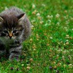 ペットのための防災対策をおこなっている人は、わずか2割(前編)