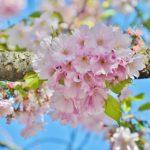 『Zoom女子会』は毎月第3土曜日に開催、4月17日の参加者募集中!