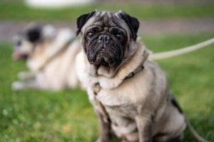あなたは愛犬あるいは愛猫の噛み癖に、悩んでいますか?