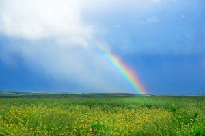 【オーダーメード・プチ動画】雨の雫と虹の写真のBGMにオルゴールが流れる#お誕生日祝い#プチ動画はいかがですか?「絆のプチ動画#13」