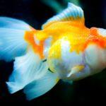 【#オーダーメードプチ動画】金魚や水草の写真に爽やかで夏っぽいBGMの#残暑見舞い#プチ動画はいかがですか?「絆のプチ動画#26」