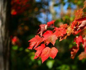 【#オーダーメードプチ動画】紅葉の森に弦楽器が軽快な#お誕生日祝いの「#絆のプチ動画#42」